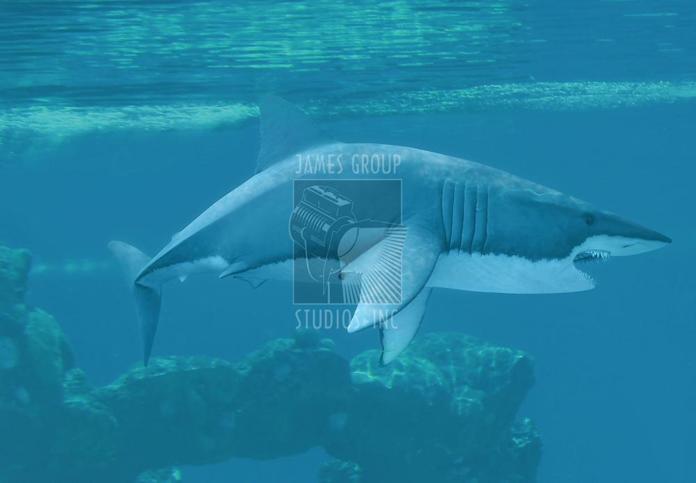 Great white shark underwater