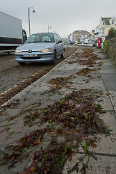 © Licensed to London News Pictures. 15/08/2012. Penzance, UK. A car drives through seaweed deposited on the road by strong winds and large waves. Photo credit : Ashley Hugo/LNP