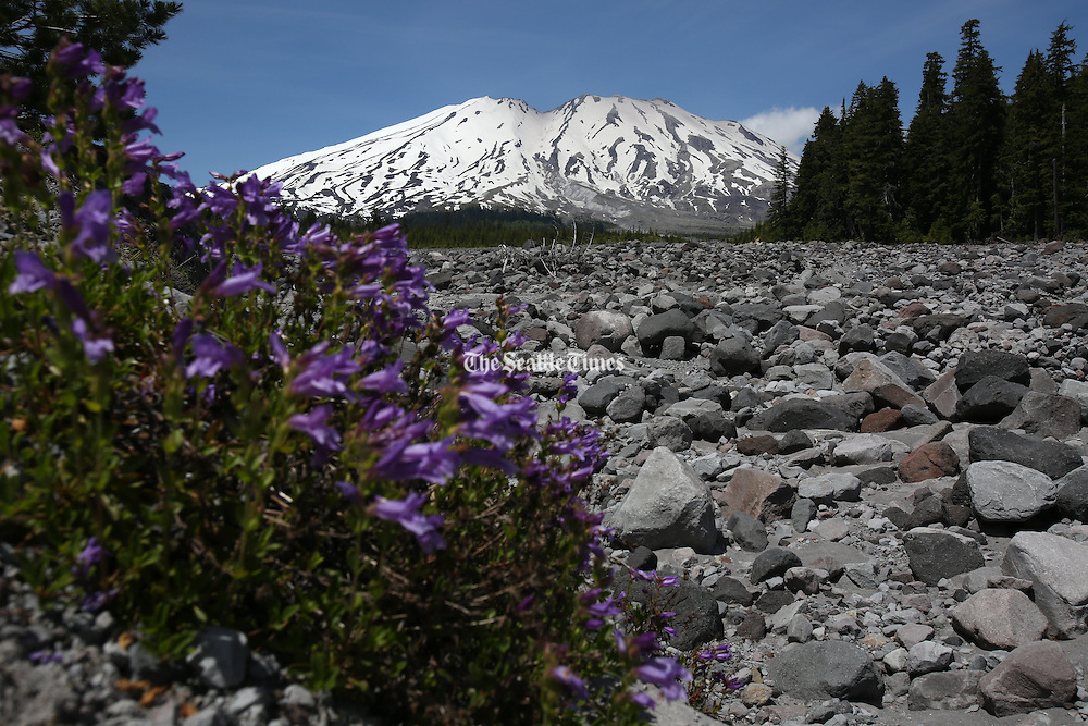 The south side of Mount St. Helens seen from Stratigraphy Viewpoint,  near Cougar, Washington.<br />