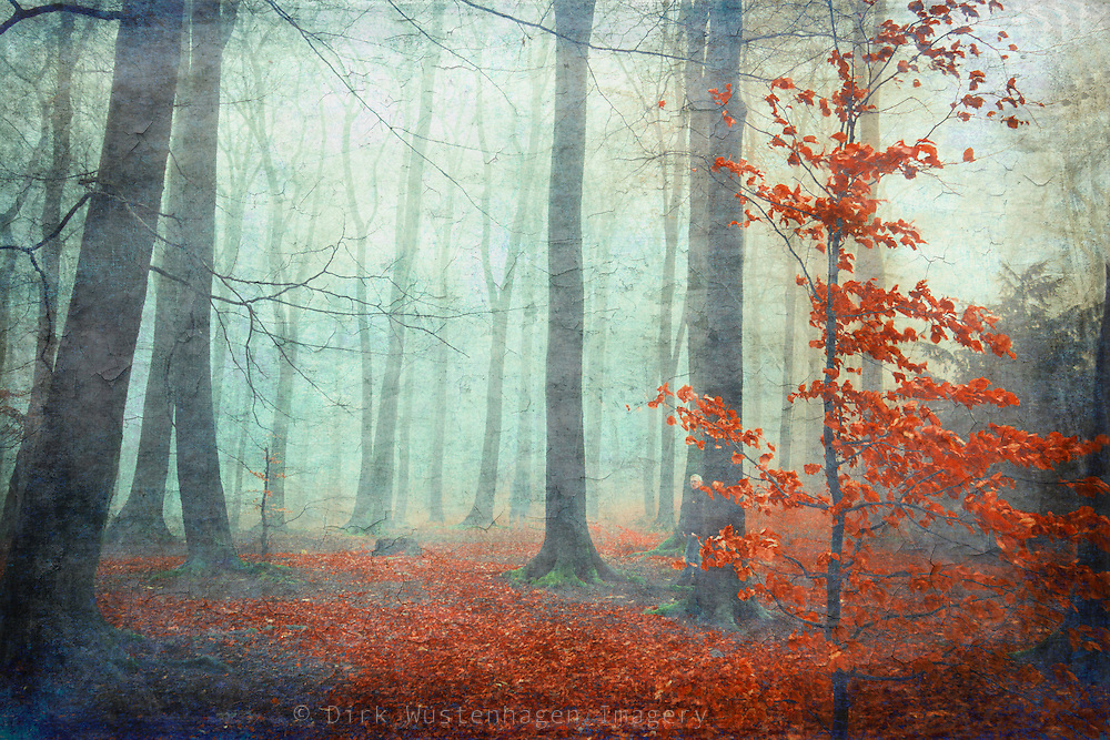 Last red fall leaves on a little beech tree in a misty forest. <br />