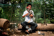 Philippines, Tawi Tawi. Proud boy and his rooster posing before a cockfighting in Bongao.