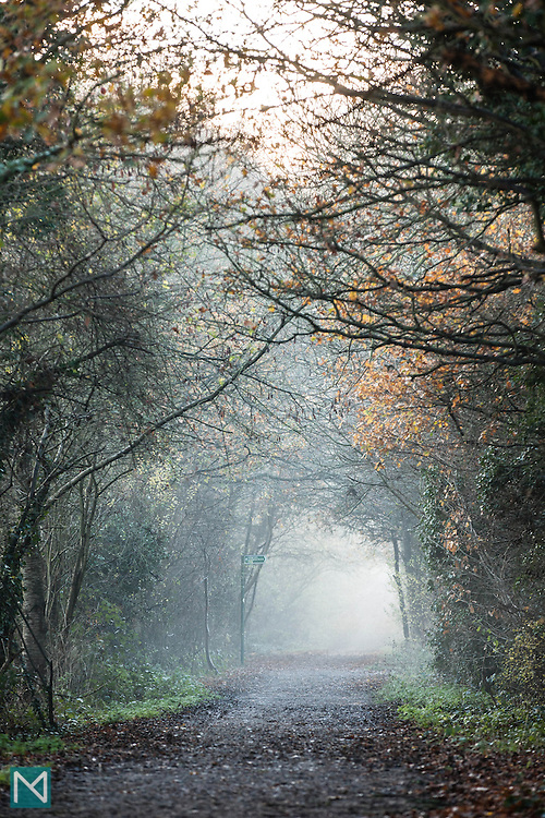 Mist hangs over the Ebury Way, a disused railway line in Watford