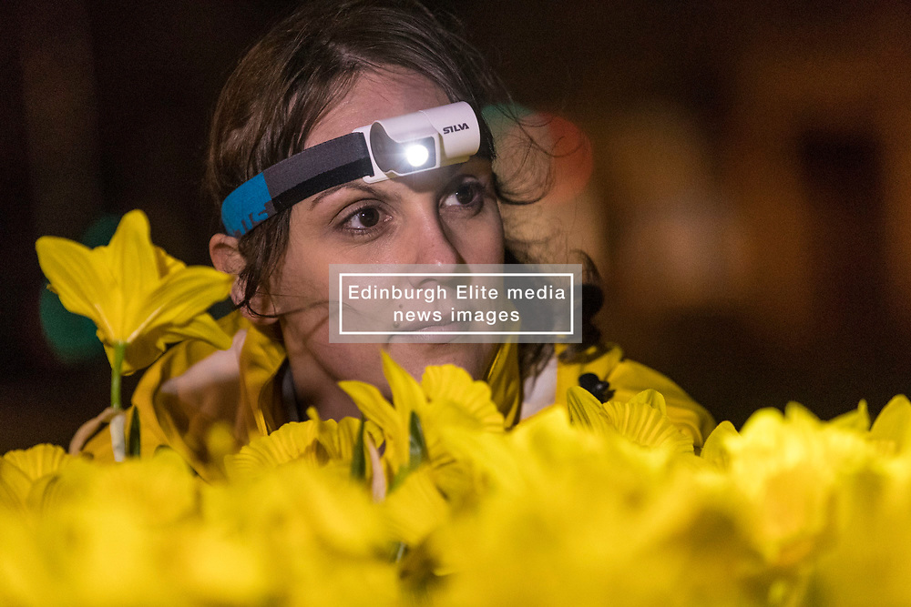 Marie Curie celebrates its Great Daffodil Appeal with an installation of 2,100 handmade daffodils called Garden of Light in Edinburgh's St Andrew Square.<br /> <br /> Pictured; Seonaigh Paterson, Partnerships Manager for Marie Curie during the installation
