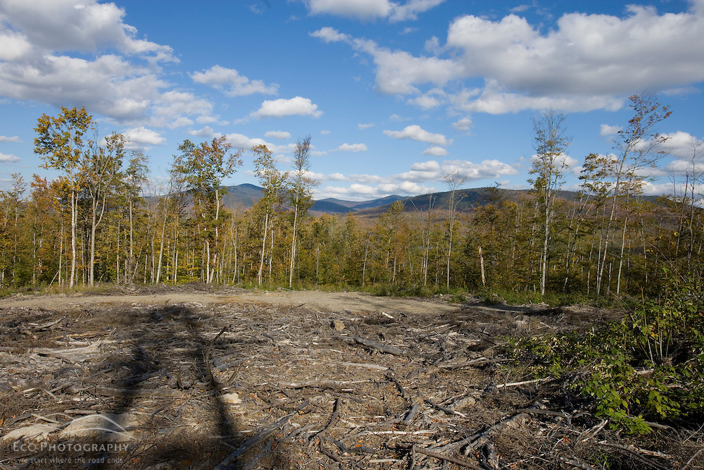 Harvested forest in a state recognized deer wintering area near Rockwood Maine USA