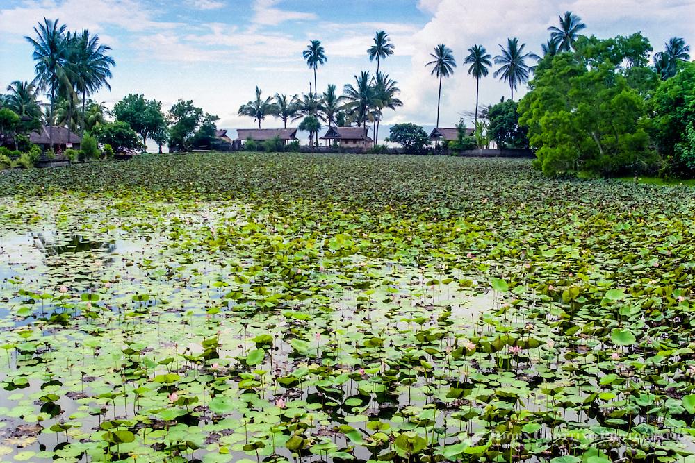 Bali, Karangasem, Candidasa. A freshwater lagoon full of lotus flowers beneath the temple.
