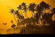 People Walking in Orange Sunset with Palm Trees, Sri Lanka