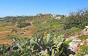 Rural farming landscape hilltop village of  Xaghra, island of Gozo, Malta