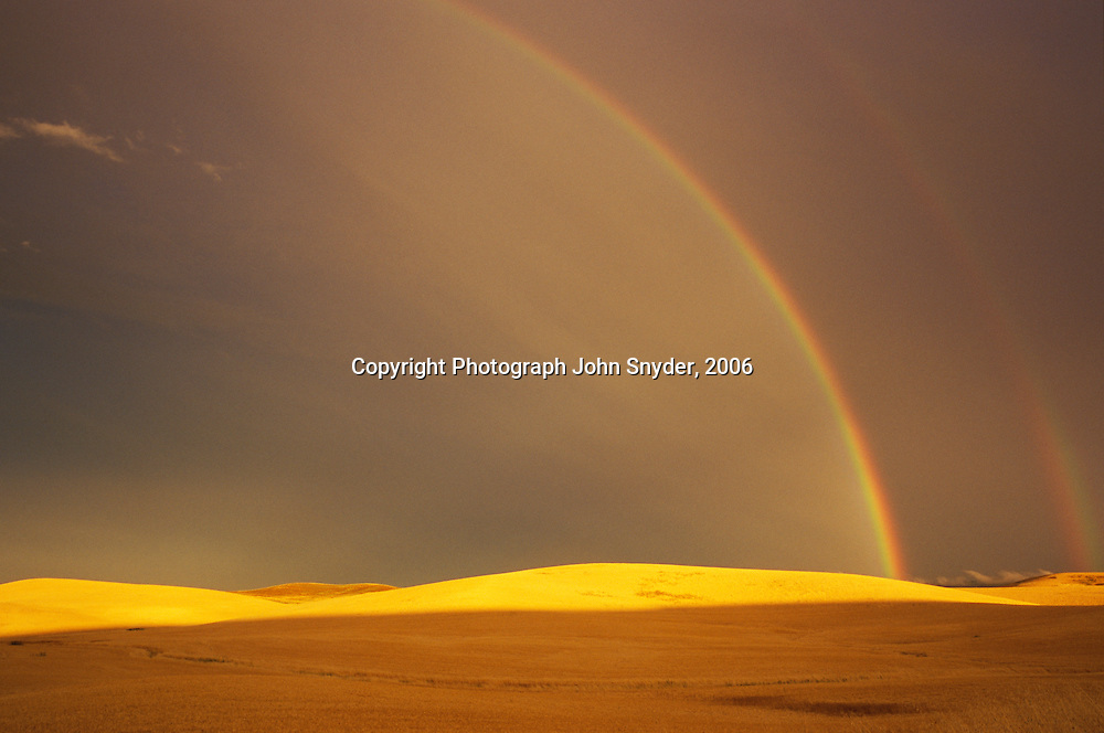 Ripe wheat field after a summer rainstorm; double rainbow near Moscow, Idaho