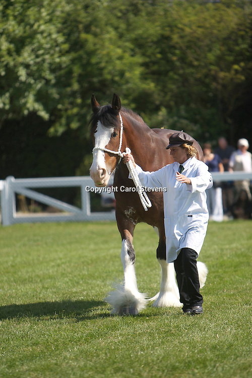 Mr F Grieves' 4 year old bay mare  Dovecote Amelia<br /> s  Doura Windy Lane Lyco<br /> 2nd  Mare three years old and over class