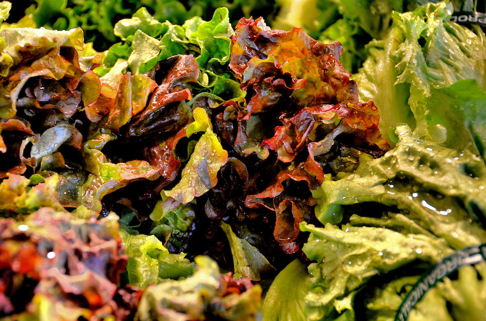 Red Oak Leaf Lettuce at Public Market Center in Seattle, Washington