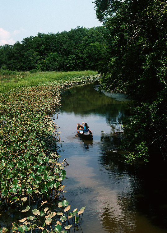 A canoeist navigates he wetlands of Mattaponi Creek a tributary of the Patuxent River wich dumps into the Chesapeake Bay.