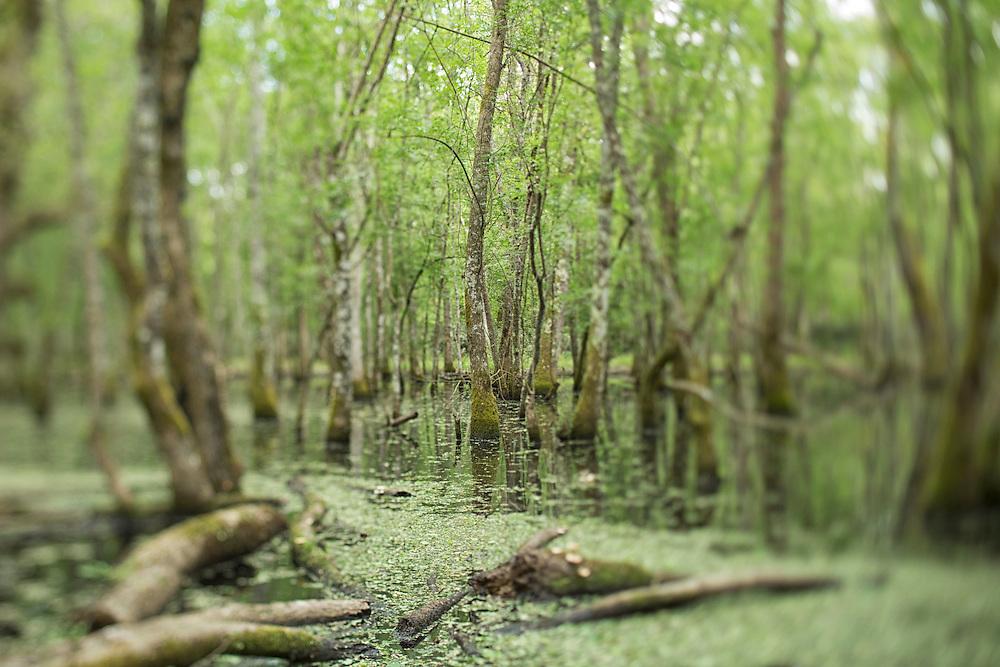 Zona umida all'interno del Parco Nazionale del Circeo Zone wet on Parco nazionale del Circeo