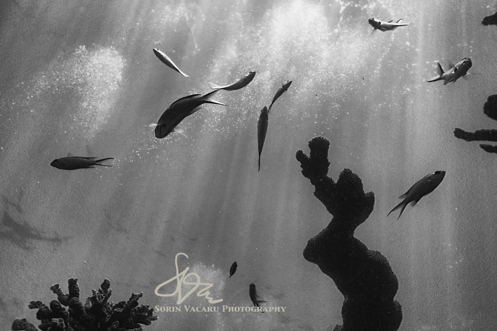 Coral Reef of Tulum, Riviera Maya