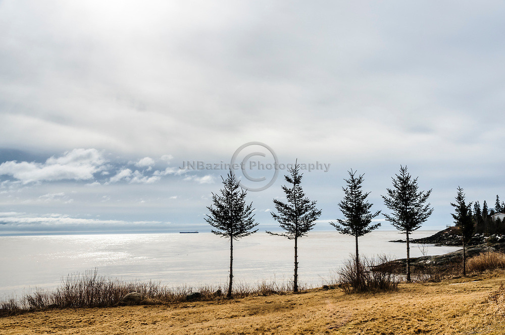 Four small spruce trees overlooking the Bay of Fundy in St-John New Brunswick, Canada