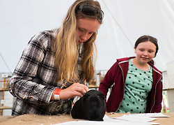 © Licensed to London News Pictures.29/08/15<br /> Bilsdale, UK. <br /> <br /> BETH RICHARDSON, 15, from Rosedale prepares her Lemon Agoutie ahead of showing it during the 105th Bilsdale Country Show in North Yorkshire.<br /> <br /> Photo credit : Ian Forsyth/LNP