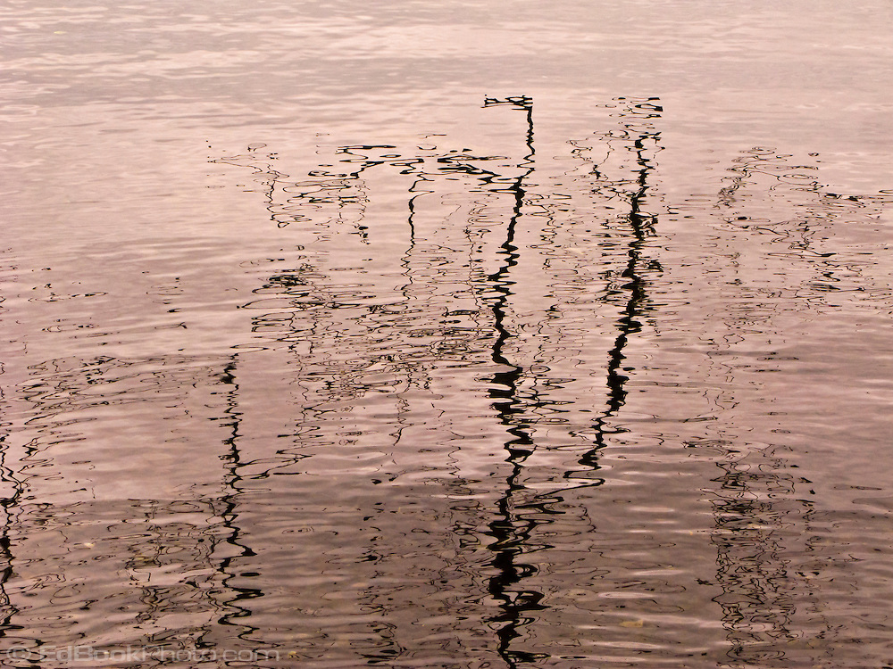 branch reflection abstract on the rippled surface of Lake Crescent in the Olympic National Park, Washington state, USA