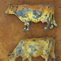Two scratched lead models of brown and golden cows standing one above the other and lying on scuffed leather