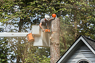 Dry River Tree Service