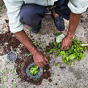CAPTION: Biopores reduce flood potential and increase groundwater quality by improving the capacity of the soil to absorb water. Organic matter is placed inside to stimulate the activities of soil-based organisms that play a major part in increasing soil porosity. LOCATION: Biopores Centre, Langkapura Village, Bandar Lampung, Indonesia. INDIVIDUAL(S) PHOTOGRAPHED: N/A.