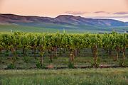 Garrison Creek Vineyards at Sunset