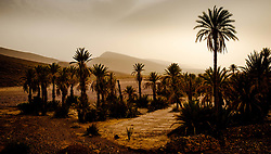 An oasis in the Moroccan desert near Foum El Oued<br /> <br /> (c) Andrew Wilson | Edinburgh Elite media