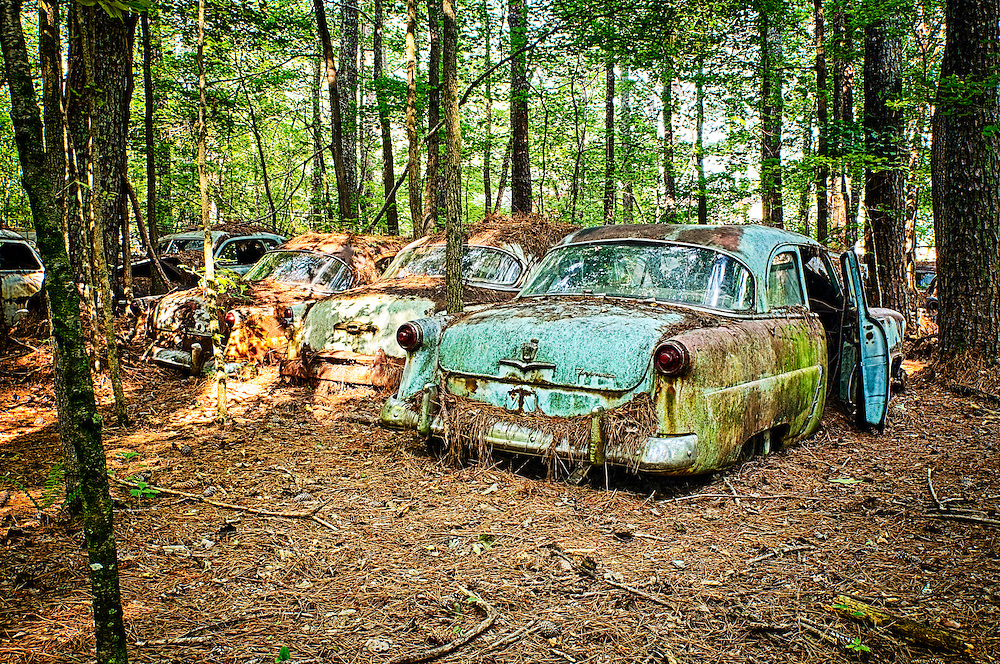 Several old cars lined up at the edge of a new forest in the Old Car City junkyard in Georgia.