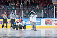 KELOWNA, CANADA - OCTOBER 22: Rocky Racoon, mascot of the Kelowna Rockets plays air guitar on the ice as the Kelowna Rockets play the Calgary Hitmen on October 22, 2013 at Prospera Place in Kelowna, British Columbia, Canada.   (Photo by Marissa Baecker/Shoot the Breeze)  ***  Local Caption  ***