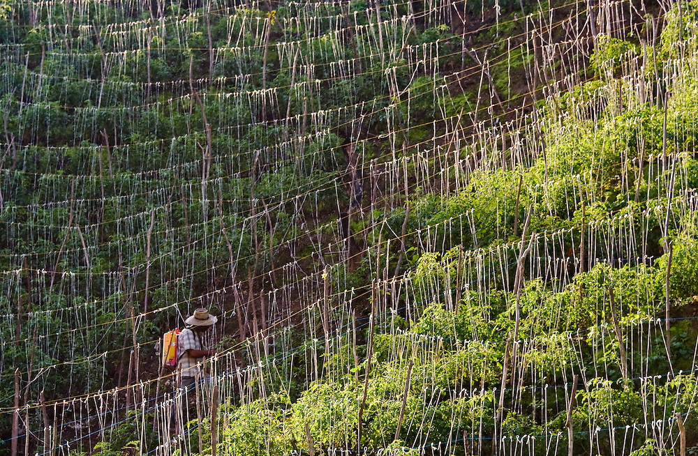 A farmer sprays his yucca plantation in the Sierra Nevada de Santa Marta, Colombia