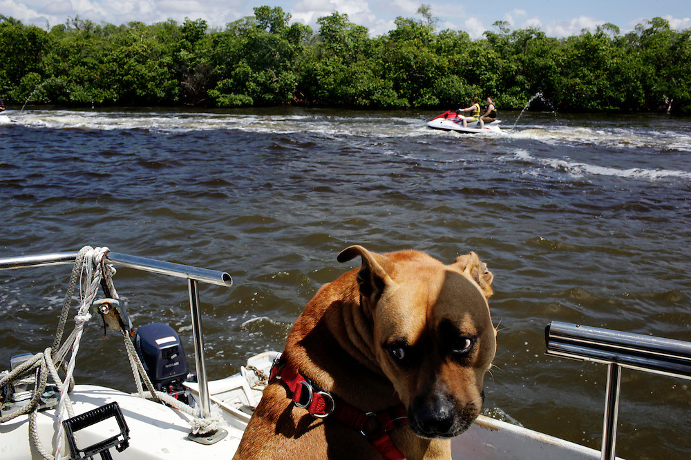 Renegade, Scot Janikula's dog, turns away as jet skiers ride by on a tour of Estero Bay.