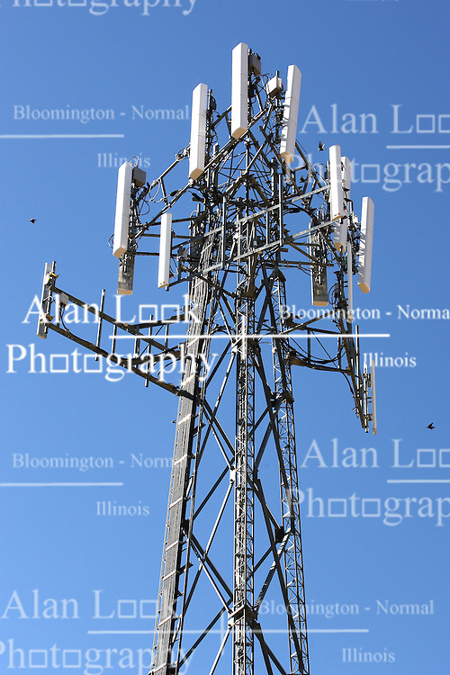 20 October 2007: Black birds swirl around a cellular tower.