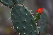 Caninde do Sao Francisco_SE, Brasil.<br /> <br /> Vale do Rio Sao Francisco. Na foto detalhe de cactus.<br /> <br /> Vale do Rio Sao Francisco. In the picture detail of cactus.<br /> <br /> Foto: JOAO MARCOS ROSA / NITRO