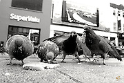 I'd watched Margaret feeding the #pigeons and photographed her on a few occasions.Having edited those i wanted to get closer to them with a #16mm lens .To do this i had to lie for more than 10 mins on the ground in waterloo Pl with the crust of a loaf of bread in front of my lens by a few cms .It took that long for one brave nosey pigeon to risk his life for a few crumbs while the others watched on to see if he'd survive or not,then they joined in .