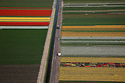 Nederland, Noord-Holland, Gemeente Anna Paulowna, 28-04-2010; bloembollenvelden in de Anna Paulowna Polder met voornamelijk tulpen en narcissen. Door de zandgrond is de polder in Kop van Noord-Holland (Noordkop) is een ware bollenstreek..Flower fields in the Anna Paulownapolder, with mostly tulips and daffodils. Because of the sandy soil the polder in the very north of North-Holland is a true flower bulb region. .luchtfoto (toeslag), aerial photo (additional fee required).foto/photo Siebe Swart
