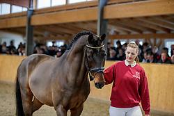 Lentini an der Hand<br /> Klein Offenseth - Hengstschau Stall Hell 2020<br /> © www.sportfotos-lafrentz.de/Stefan Lafrentz