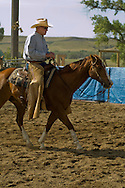 Tom McGuane, author, at cutting horse competition, Big Timber, Montana, Quarter Horse, Hard Hat Harry