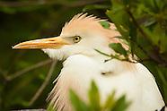 Nesting & Roosting Birds
