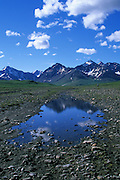 A lone hiker heads for the headwaters of the Sanctuary River in Alaska's Denali National Park.