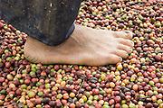 Coffee growing in Buon Ma Thuot, Vietnam for a GTZ / Nestle Project - 7 Nov 05