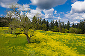 Willamette Valley Vineyards - Bernau Esatate Dundee Hills April 2019