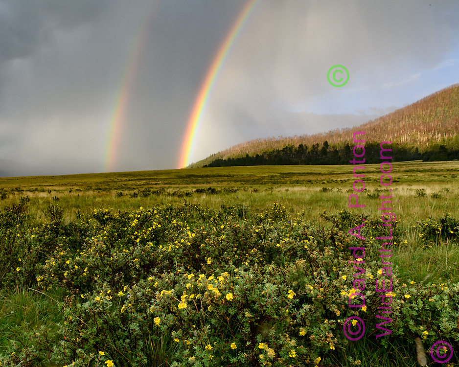 Rainbow at the Valle Grande, with shrubby cinquefoil in bloom, Valles Caldera National Preserve, (vhorizontal 4x5, 8x10, 16x20) © 2018 David A. Ponton