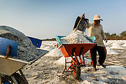 "28 MARCH 2014 - NA KHOK, SAMUT SAKHON, THAILAND: A salt worker collects salt in an evaporation pond in Samut Sakhon province. Thai salt farmers south of Bangkok are experiencing a better than usual year this year because of the drought gripping Thailand. Some salt farmers say they could get an extra month of salt collection out of their fields because it has rained so little through the current dry season. Salt is normally collected from late February through May. Fields are flooded with sea water and salt is collected as the water evaporates. Last year, the salt season was shortened by more than a month because of unseasonable rains. The Thai government has warned farmers and consumers that 2014 may be a record dry year because an expected ""El Nino"" weather pattern will block rain in mainland Southeast Asia. Salt has traditionally been harvested in tidal basins along the coast southwest of Bangkok but industrial development in the area has reduced the amount of land available for commercial salt production and now salt is mainly harvested in a small parts of Samut Songkhram and Samut Sakhon provinces.    PHOTO BY JACK KURTZ"