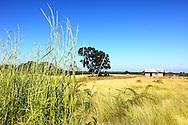 Farm in Bartolome Maso area, Granma, Cuba.