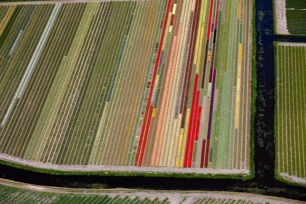Nederland, Noord-Holland, Gemeente Lisse, 12-05-2009; Bollenvelden tussen Hillegom en Sassenheim.Swart collectie, luchtfoto (toeslag); Swart Collection, aerial photo (additional fee required).foto Siebe Swart / photo Siebe Swart