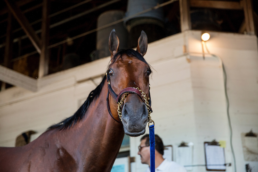 April 29, 2015: American Pharoah at Churchill Downs Louisville Ky. Alex Evers/ESW/CSM