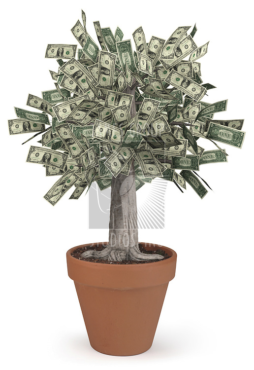 High-resolution 3d render of a rooted tree with a thick stock that is growing currency for it's leaves over a white background.