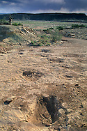 Fossilized Dinosaur tracks, (Brontosaurus) shown crossing an ancient stream bed, north of Moab off hwy 191, UTAH