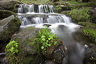 Stream flowing over moss-covered rocks, blurred motion, Yosemite National Park, California, USA