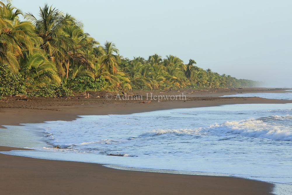 Tortuguero National Park, Caribbean coast, Costa Rica.