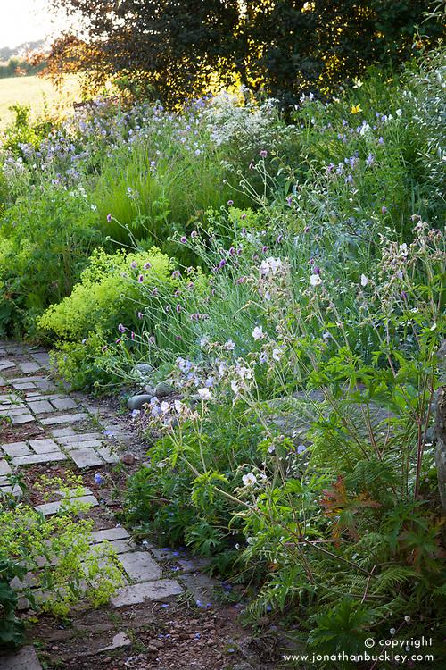 Geraniums in the brick garden at Glebe Cottage