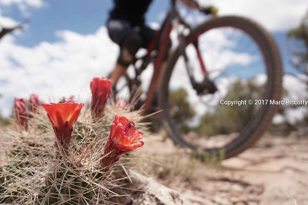 SHOT 5/21/17 12:42:36 PM - Emery County is a county located in the U.S. state of Utah. As of the 2010 census, the population of the entire county was about 11,000. Includes images of mountain biking, agriculture, geography and Goblin Valley State Park. (Photo by Marc Piscotty / © 2017)